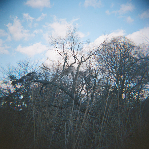 wind_winter_trees